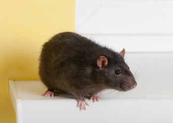 Pest Protection Plus :: Commercial Pest Control - Rodent Control