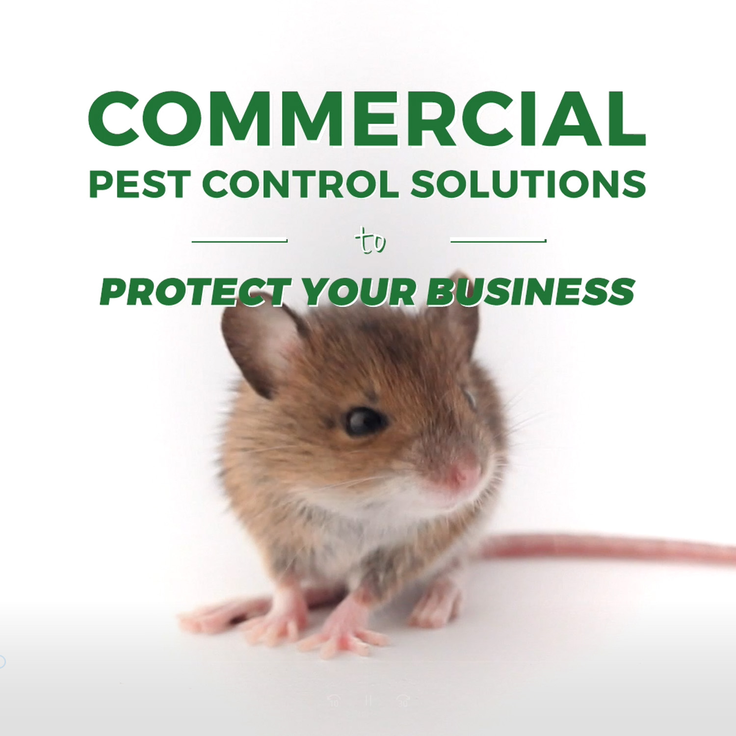 Pest Protection Plus :: Commercial Wildlife & Pest Control Solutions